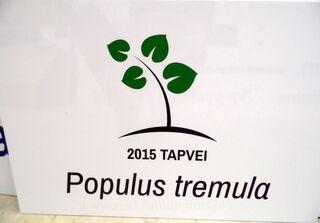 PVC silt kleebisega, Tapvei